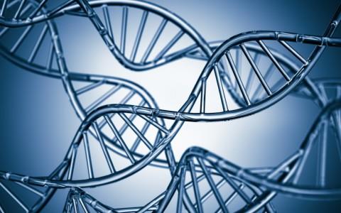 DNA Parentage